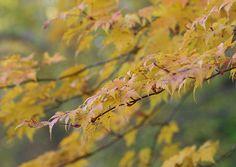 五味池破風高原自然園 2012/10/20