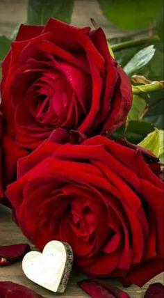 Rose Flower Wallpaper, Flower Background Wallpaper, Heart Wallpaper, Hd Wallpaper, Red Background, Background Images, Red Rose Petals, Pink Rose Flower, Red Roses