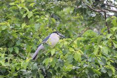Garden, Tree, Nature, Outdoors, Leaf, Bird #garden, #tree, #nature, #outdoors, #leaf, #bird