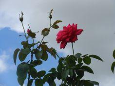 Rosa...sempre rosa.