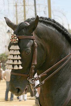 Jerez de la Frontera Horse Festival Spain ...beautiful...look at those eyes