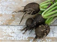 "Round Black  Spanish Radish - rareseeds.com - large 5"" winter type; will keep all winter in good conditions; fine, fairly hot flavor; good raw or cooked"