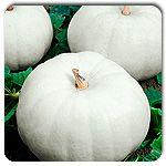 Organic Casper Pumpkin
