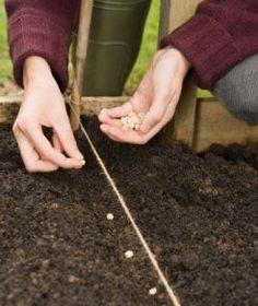 Planting seeds  (@Jane Bozarth Learning/Teaching Metaphors)