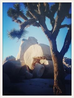 at Joshua Tree National Park