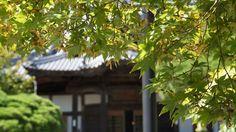 2016 夏 修禅寺