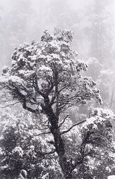 An image of Summer snow, Tasmania by David Moore