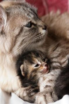 Momma cat and kitten