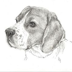 Поиск по сайту Beagle Art, Illustrators, Dogs, Animals, Animaux, Doggies, Animales, Illustrator, Illustrations