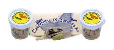 TOPSELLER! 10 Live Caterpillars Shipped Now: Butterfly Kit Refill $24.95
