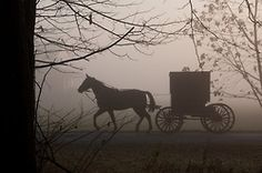 Amish buggy in the fog
