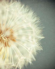 $25.00- Dandelion Photograph Flower art print by LisaRussoPhotography