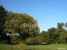 Blauer Himmel über dem Barkhauser Weg am Holzkampbach in Oerlinghausen in Ostwestfalen-Lippe