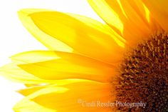 16 summer finds, Yellow Makes Me Happy, curated by The Classy Jewelry Box on Etsy Sunflower Photography, Photography Basics, Floral Photography, Photography Projects, Fine Art Photography, Amazing Photography, Nature Photography, Happy Flowers, Wild Flowers