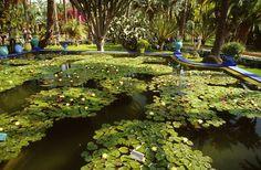 Jardin Majorelle - Marrakesh