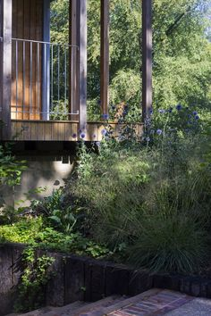 House in the Woods Surrey - Tierney Haines Architects House In The Woods, Surrey, Architects, Building, Plants, Buildings, Building Homes, Plant, Construction
