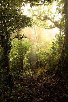 Monte Verde Cloud Forest, Costa Rica