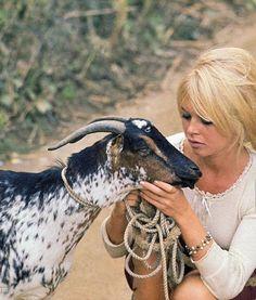 Miss Brigitte Bardot Brigitte Bardot, Bridget Bardot, Most Beautiful Animals, Most Beautiful Faces, Glamour Photo Shoot, Celebrities With Cats, Singer Fashion, And God Created Woman, Animal Activist