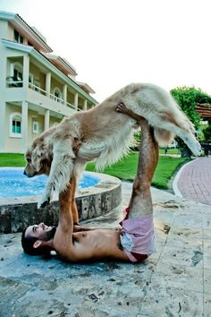 Synergy yoga for dogs! Love