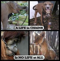 Don't own a pet if all you can offer is a chain.