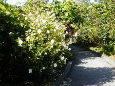 A pathway in The Views Garden in Comox, BC, Canada