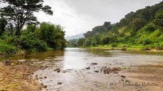 Rzeka Madagaskar w Afryce - jeden z biotopów odtwarzanych przez akwarystów słodkowodnych.