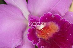 pink flower. - Close-up of pink flower.