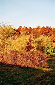 The Democratic Forest by William Eggleston