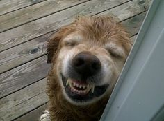 #smile #dogs