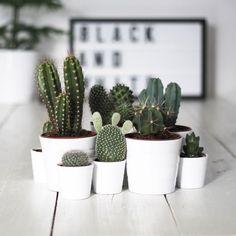Plantas para alegrar el hogar   Decorar tu casa es facilisimo.com