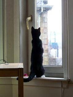 15 Cats Gazing Out The Window And Looking Cute - I Can Has Cheezburger? White Cats, Blue Cats, Cat Window, Cat Stands, Kinds Of Cats, Curious Cat, Cat Facts, Fauna, Crazy Cats