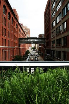 Oudolf ~ High Line, Manhattan, New York, NY. _/////_