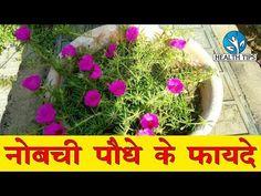 Home Health Remedies, Natural Health Remedies, Basic Mehndi Designs, Zen Garden Design, Garden Balls, Garden Care, Indoor Plants, Health Tips, Cool Things To Buy