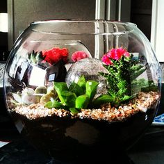 Succulent terrarium night light. Made with a large glass vase, lots of tiny cacti, a solar garden light with the stake removed, and crushed seashells. <3