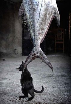 152405-R3L8T8D-650-cat-thief-funny-animal-pictures-38__605