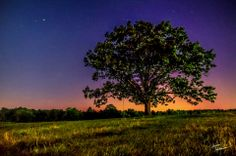 Theme: Fireflies | Title: Firefly Timelapse/Cinemagraph