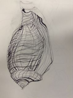 Contour drawing of a shell
