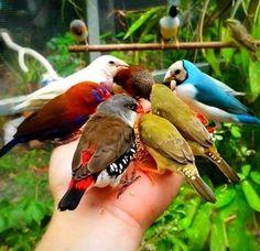 Dios cada dia nos ilumina con    La naturalesa y los colores