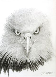 pencil drawings of eagles Bird Drawings, Animal Drawings, Drawing Sketches, Tattoo Drawings, Pencil Drawings, Eagle Sketch, Eagle Face, Eagle Drawing, Eagle Pictures