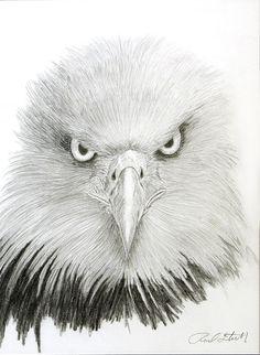 pencil drawings of eagles | Eagle Eye Drawing - Eagle Eye Fine Art Print
