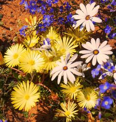 Namibia Accommodation -- lodges, hotels, guest houses and farms, bed & breakfast. Holiday Photography, Travel Planner, Cape Town, Bed And Breakfast, Lodges, Wild Flowers, Trips, Vacation, Plants