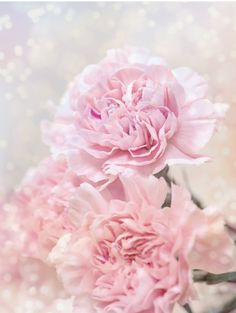 A lovely gift idea for a friend, loved one or family member. It's also a wonderful wall decor idea for a romantic bedroom. afflink ideas for women classy Beautiful Dreamy Pink Carnations