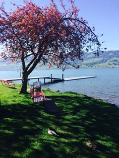 Upper Lake Zürich near Rapperswil, Canton of St. Gallen. Photo from 22/04/2015