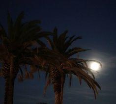 "Gefällt 33 Mal, 3 Kommentare - Jan (@jvn__) auf Instagram: ""#palmtrees #moon #moonlight #sony #bol #croatia #flatbushzombies #travel #wanderlust"""