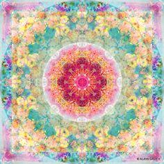 Flower Mandala © ALAYA GADEH at artistrising and art.com