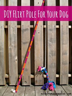 "Flirt Poles are one of the coolest and easiest tools to physically and mentally challenge your dog, at home. Flirt Poles teach your dog: --> basic manners --> impulse control  --> that he/she gets to chase something without getting in trouble  --> that doggie ""workouts"" are FUN and FAST!  And there's a bonus for you: It's not a lot of work or effort on your part! Check out:http://notesfromadogwalker.com/2012/04/24/flirt-pole/ #pets #dogs"