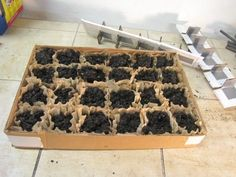 Picture of Nursery/Hothouse Seedling Starter Tray: DIY seed tray using cardboard box and coffee filters!