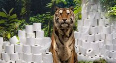 Don't let your toilet paper destroy tiger habitats!