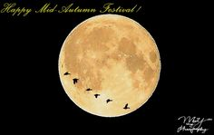 02- Happy Mid-Autumn Festival ! ~ Forest Hills, New York, U.S.A Happy Mid Autumn Festival, Photo Editing, York, Photos, Poster, Editing Photos, Pictures, Photo Manipulation, Image Editing