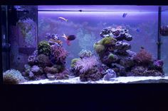 Minimalist Aquascaping - Page 75 - Reef Central Online Community